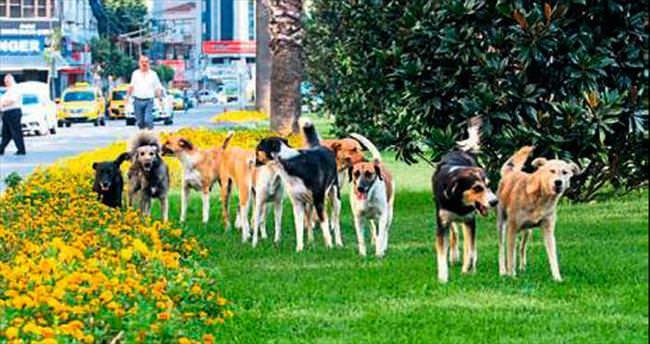 İzmir'deki sokak köpeği sayısı 300 bin