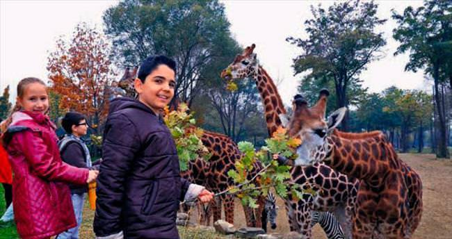 Zürafaları elleriyle beslediler