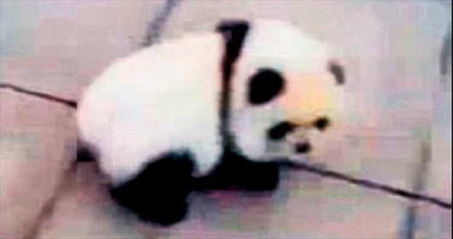 Köpeğini 'panda' yaptı!