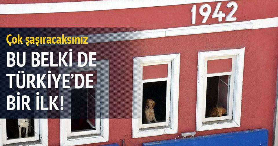 Köpekleri için ev kiraladı!