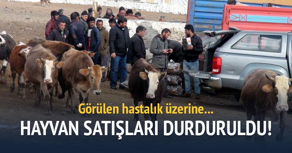 Kars'ta şap hastalığı görüldü, hayvan satışları durdu!