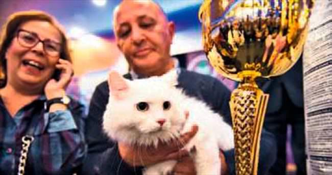 En güzel Ankara kedisi seçildi