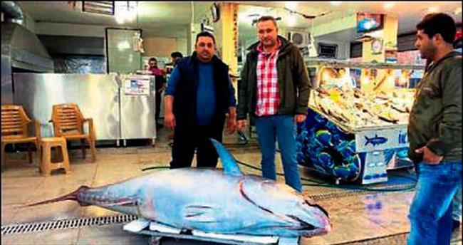 Ege'de 403 kiloluk 'dev orkinos' balığı yakalandı