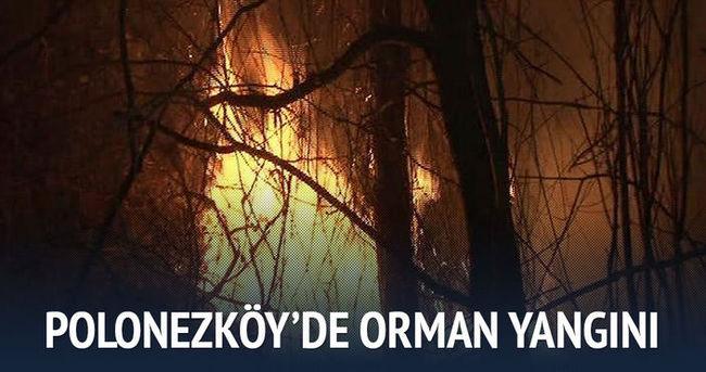 Polonezköy'de orman yangını