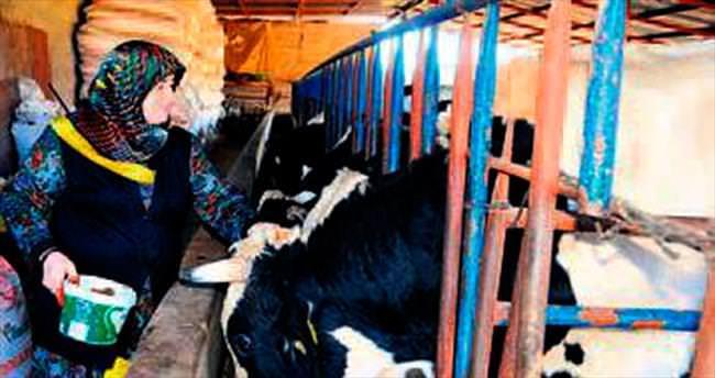 Haymanalı kadın çiftçilere destek