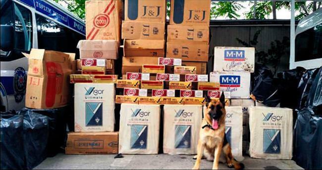 Çakma kargo aracında 255 bin paket sigara