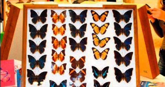 Kelebek bahçesi Ankamall'de