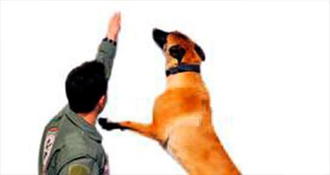 Dedektör köpekler Kuşadası'nda eğitimde
