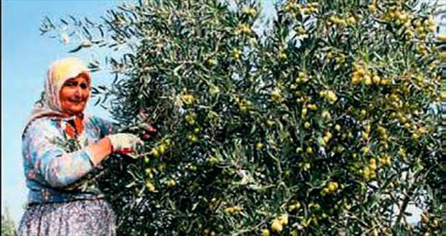 Zeytinyağı Oscarları sahiplerini arıyor