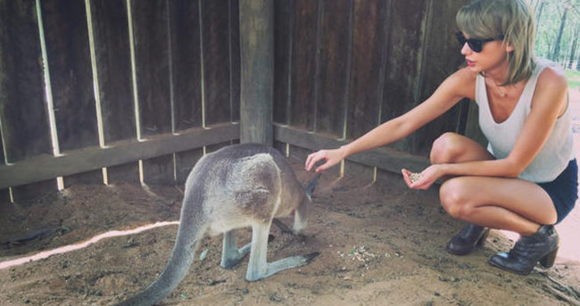 Taylor Swift kanguruyla selfie çekti