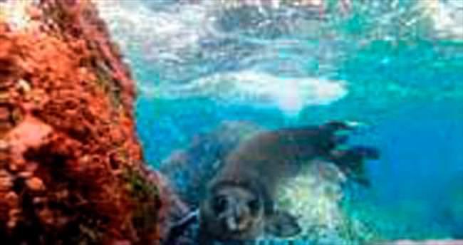 Akdeniz Foku'nu görüntüleme sevinci