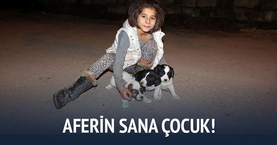Minik kız, mahsur kalan köpekleri kurtardı
