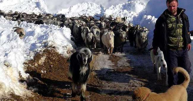Yaylada mahsur kalan çobanlar 5 gün sonra kurtarıldı