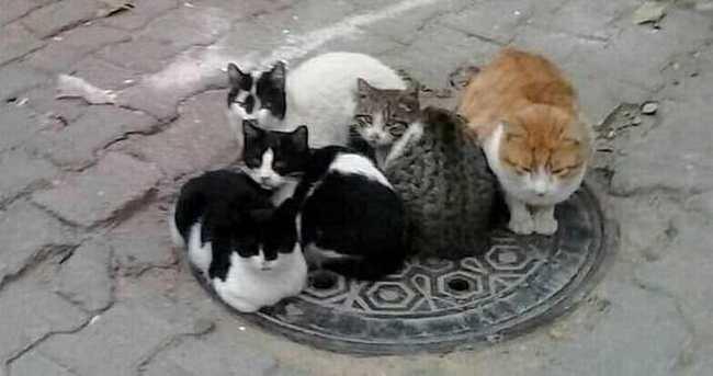 Bu kediler işini biliyor