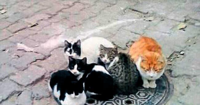 Balçova'nın kedileri jeotermali keşfetti