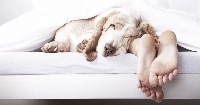 Eğer evcil bir hayvanla uyursanız...