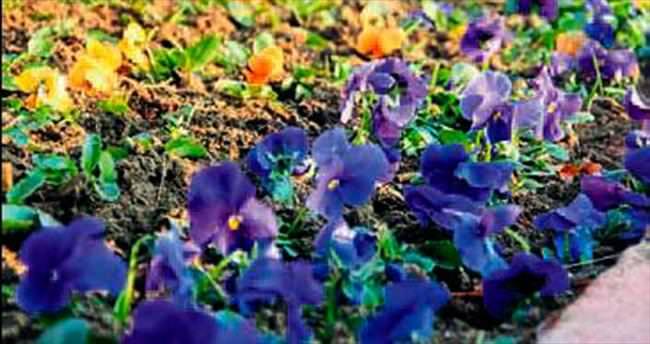 Menderes'in dört bir yanı renklendi