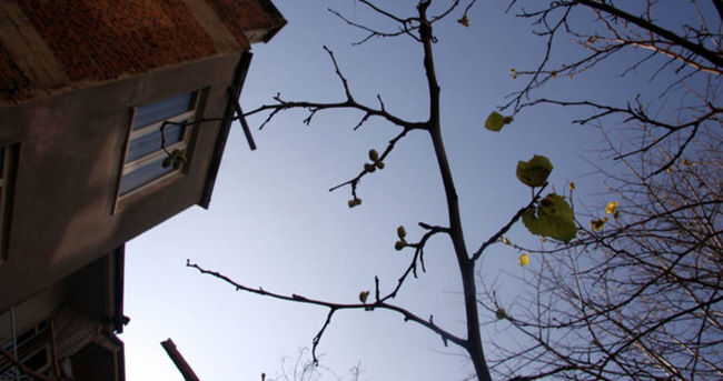 Dut ağacı kış mevsiminde meyve verdi