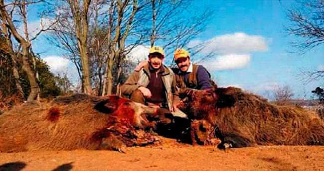 250 kiloluk domuz avı