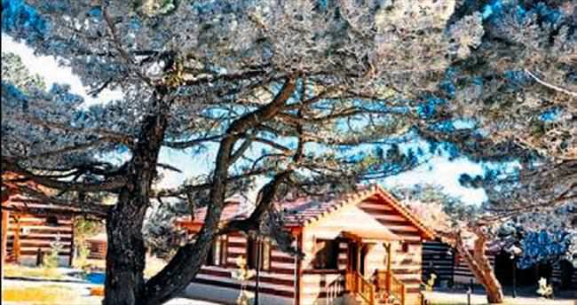 Spil Dağı'nda yılın ilk günü kar keyfi vardı
