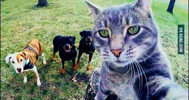 Kedinin selfie'si görenleri şaşırttı