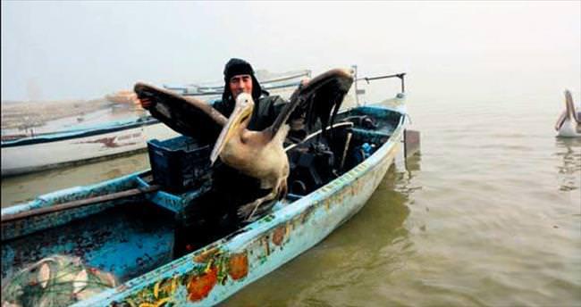 Kuş Cenneti'nin beleşçi pelikanları