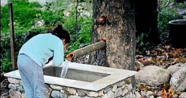 150 yıllık ağacın gövdesi çeşme oldu
