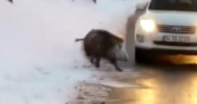 İstanbul'da yola domuz indi