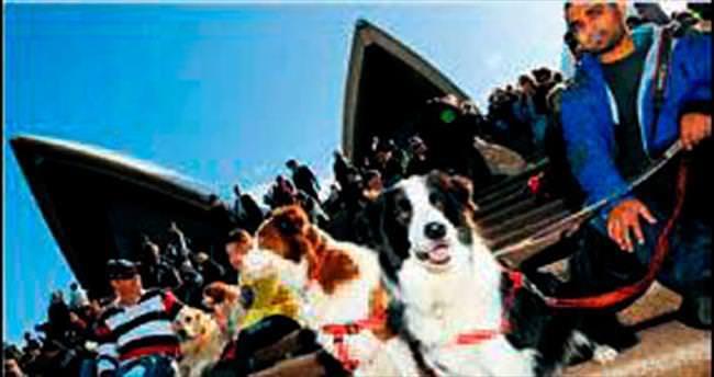 Köpeklere özel konser
