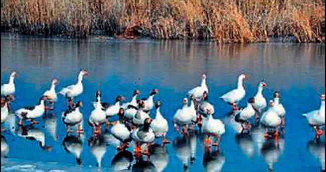 Süleymanlı Gölü soğuktan dondu