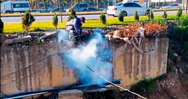 Manavgat'ta sinek mücadelesi başladı