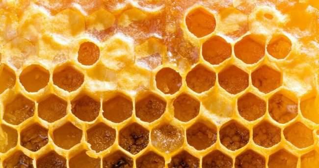 Arıların doğal antibiyotiği: Propolis