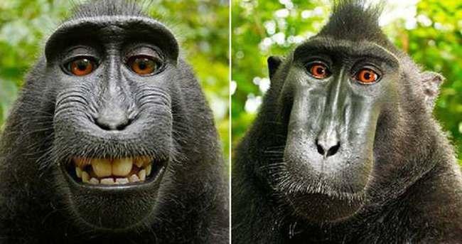 Mahkeme selfie çeken maymunla ilgili kararını verdi