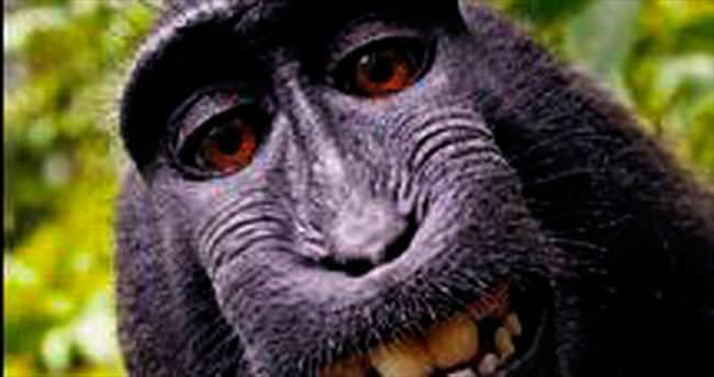 Maymuna telif talebine ret