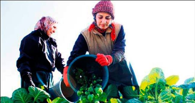 Brüksel lahanasına ambargo darbesi
