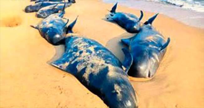 81 balina karaya vurdu