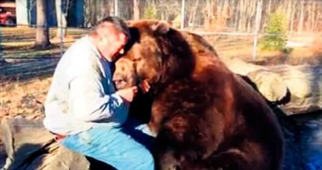 680 kiloluk ayıya böyle sarıldı