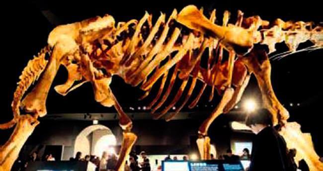 Dev dinozor iskeleti New York'ta