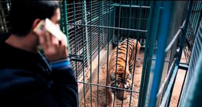 Hayvanlar da abluka altında!