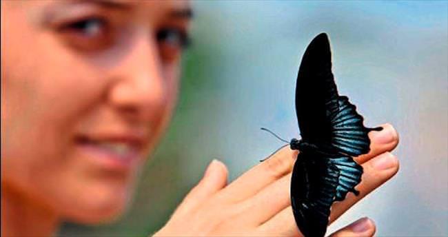 Kelebekler baharı bekliyor