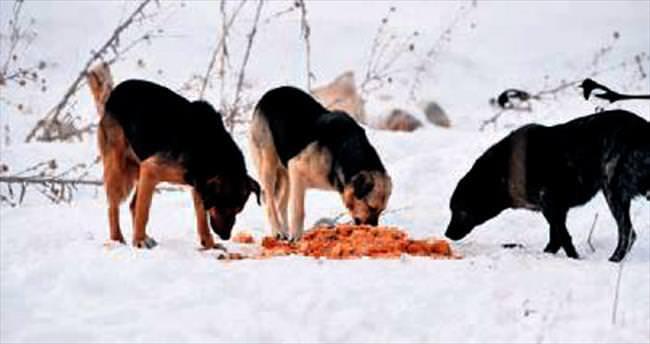 Yemek artıkları aç kalan köpeklere