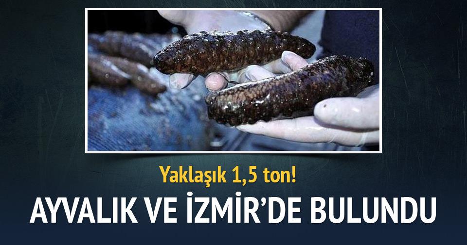 Ayvalık ve İzmir'de deniz patlıcanı operasyonu
