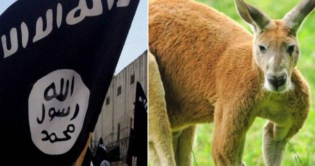 Kanguruyu canlı bomba yapan DAEŞ'ci yakalandı