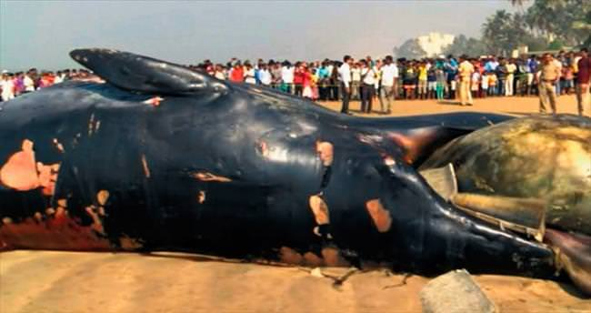 12 metrelik balina karaya vurdu