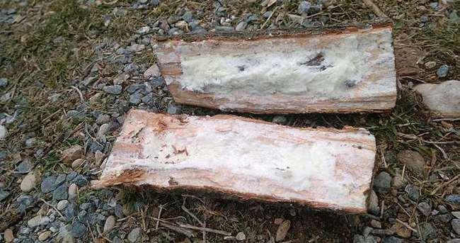 3 'Odun bomba' daha bulundu