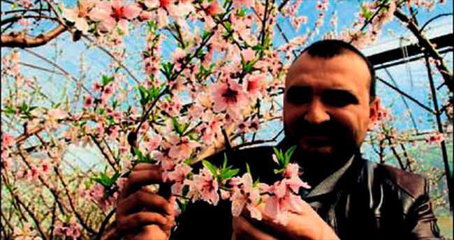 Erdemli'de nektarin ağaçları çiçek açtı