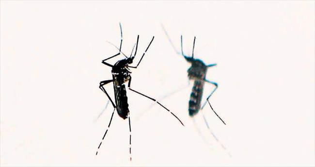 Dört soruda Zika virüsü