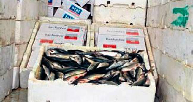 Balık arası kaçak sigara yakalandı