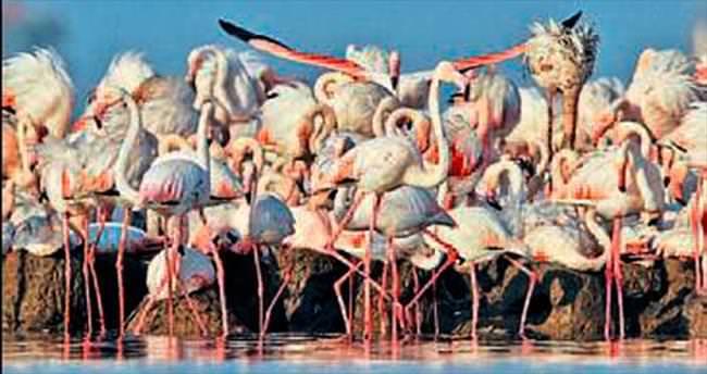 İzmir Kuş Cenneti dünyaya tanıtılacak