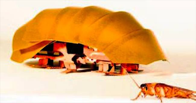 Arama-kurtarma hamamböceği!